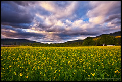 Hood River Flowers and Clouds (Darren White Photography) Tags: flowers sunset sky clouds oregon canon landscape pacificnorthwest hoodriver 1740l darrenwhite 5dmkii
