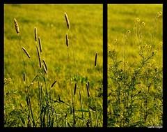 tranquility (Garik dgar) Tags: sunset grass greent richcolors