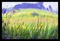 distorted light (Wim Koopman) Tags: light red green grass yellow photography photo nikon purple distorted stock meadow blues stockphoto stockphotography horzion d90 wpk