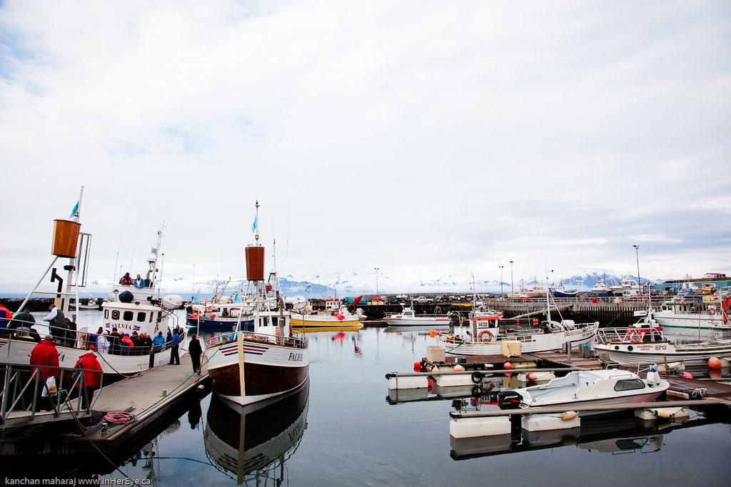 Iceland Day 5-7 - Husavik