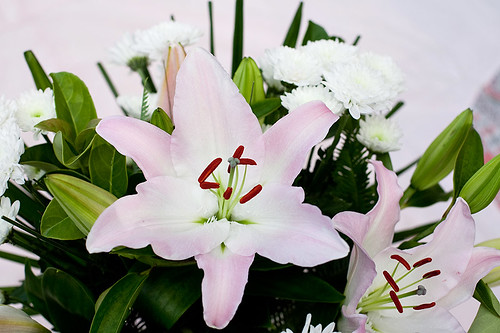 Lillies and Chrissies