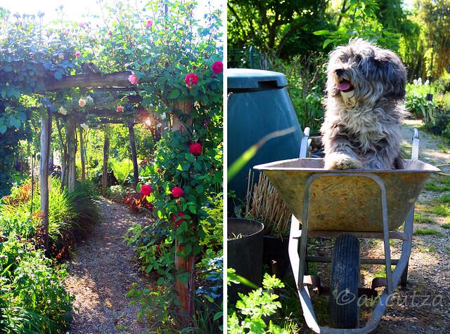 auguri di buon  lunedì con foto cane divertente