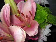 gradGifts11 (mary2678) Tags: flowers burlington university vermont graduation class gift vt uvm 2010 undergraduate