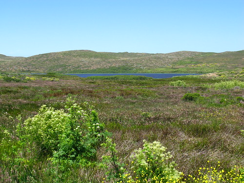 Abbots Lagoon (Point Reyes)