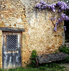 Le vieux mur et la glycine (Yvan LEMEUR) Tags: france village dordogne prigord mur glycine aquitaine paunat leuropepittoresque