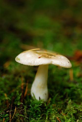 mushroom2-0252