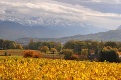 L'automne est dans les vignes! ~ Autumn in the vineyard (Michele*mp slowly catching up) Tags: autumn snow france mountains nature yellow rural jaune alpes automne landscape countryside vineyard october europe neige chambry savoie paysage campagne vignes vignoble octobre montagnes frenchalps tistheseason belledonne rhnealpes myans bej francelandscapes michelemp