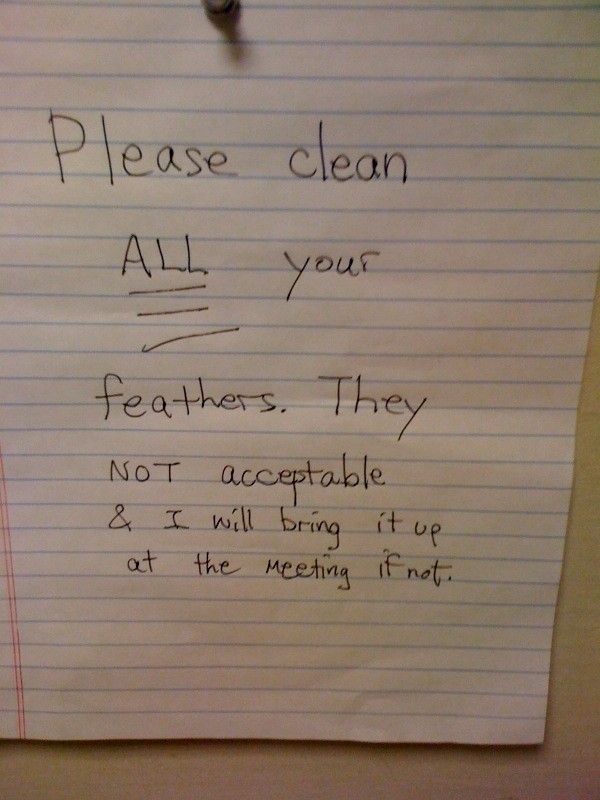 Please clean ALL your feathers. They NOT acceptable & I will bring it up at the meeting if not.
