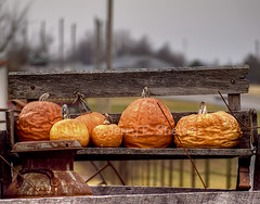 Halloween's OVER! (Uncle Phooey) Tags: orange scenic rusty missouri weathered ruraldecay undone wrinkly milkcan wagonseat halloweensover dilapidatedpumpkins gimmeallyourcandyallyourhersheyskissestoo scenicmissouri