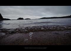 The Beach (Tomas Whitehouse) Tags: november winter dogs mkki saimaa sulkava cottagetrip easternfinland