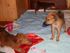 Hunde - 50 (Manfred Lentz) Tags: pets dogs puppy pups puppies hunde littledogs welpen hndchen babydogs whelps