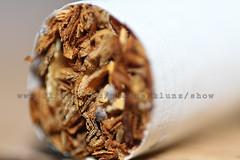 Cigarette close [ Canon 7D - Pringles 18-55 ] ( [ Libya Photographer ]) Tags: close cigarette cigar libya benghazi