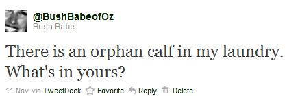 calf tweet1