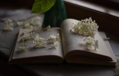 Flower Story (Captured Heart) Tags: hydrangea flowers flowerpetals book bookpages stilllife