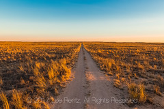Road through Shortgrass Steppe Prairie at Dawn in Eastern New Mexico (Lee Rentz) Tags: 2track lesserprairiechicken newmexico prairiechicken tympanuchuspallidicinctus america americanwest courtship dawn dirt display distance distances early expanse glow golden grass grasses grassland gravel habitat horizon landscape lane lek leks light location middlegrass mixedgrass morning narrow nature northamerica oilpatch open outdoors prairie range rangeland remote remoteness road route sand shortgrass shortgrasssteppe sky southwest spread straight sun sunlight twotrack unitedstates usa vast vastness west wild