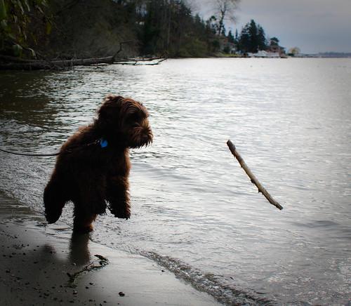 Stick chasing