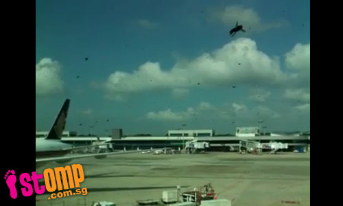 Invasion of bees at Changi Airport forces change in AirAsia gate