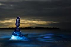 Global Warming (edouardv66) Tags: water photoshop copenhagen editing 2009 challenge warming global
