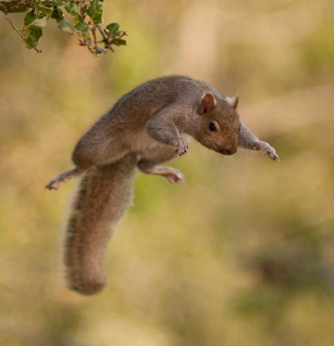 Serious Squirrel