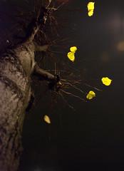(spinetta) Tags: ca desktop foglie che autunno stoccolma immagini cadono