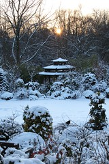 Cold sunset (Four Seasons Garden) Tags: charity winter snow west english beautiful marie gardens garden four day all open seasons january picture tony national scheme newton walsall midlands ngs