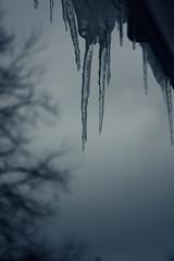 UK's big freeze (atache) Tags: uk cold freeze icicles project365