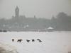 winterlandschap met ganzen voor Jachtslot St.Hubertus (katjekip) Tags: winter sneeuwbui grauweganzen parkdehogeveluwe jachtslotsthubertus