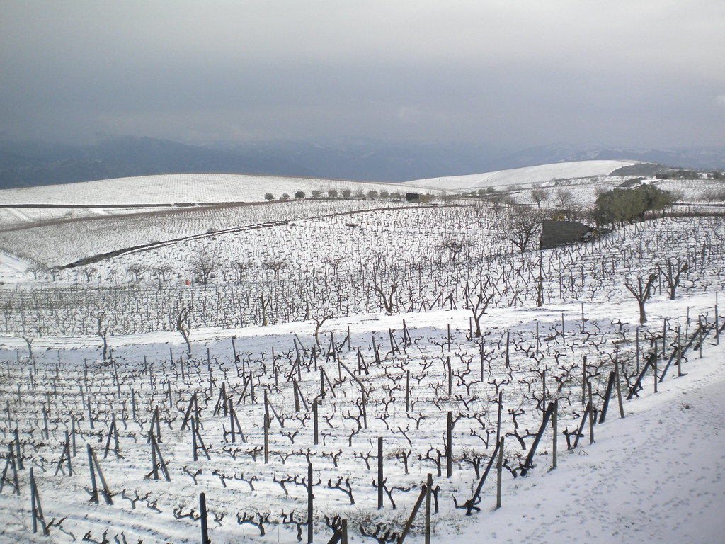 Snowed vineyards in the Douro