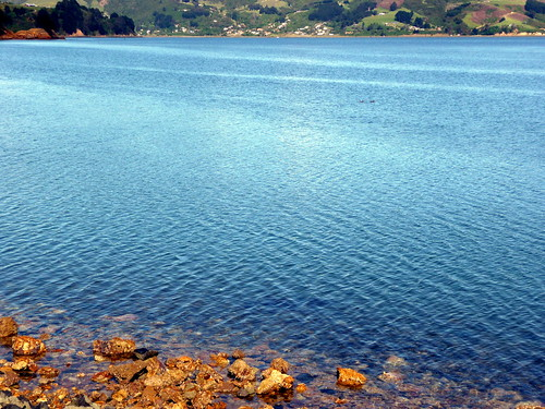 21_019 Dunedin Bay NZ