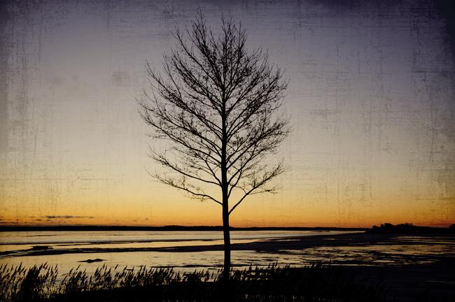 mitt magiska träd