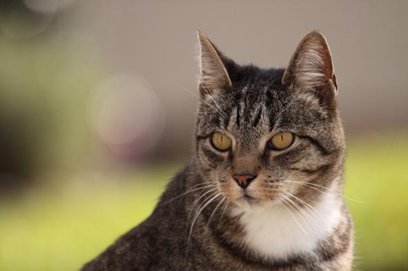 kitty2_122109