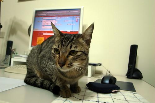 CaVa on desk