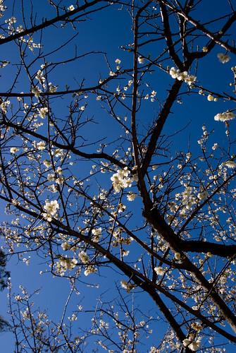 【桃園】桃園一日遊之角板山