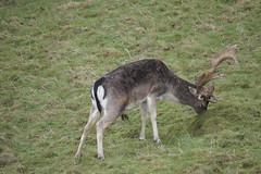 DSC00427 (Sarah Bailey) Tags: park dyrham 170110