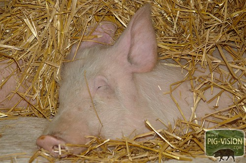 To sleep in straw, that´s how things should be.