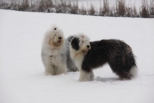 Sneeuw 24 januari