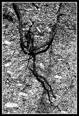 Rock climber (philwirks) Tags: bw abstract public picnik myfavs philrichards show08 philwirks