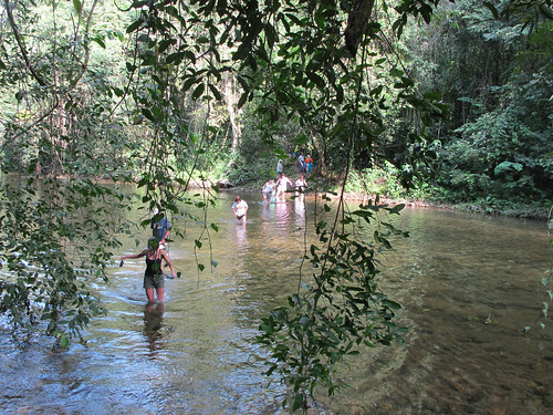 Wading a River in the Belizean Jungle