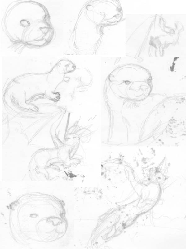 otter-sketches