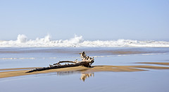 Driftwood awash (kmanohar) Tags: california sandbar bluesky driftwood determined sangregorio westcoast berm resilient pacificcoast sunnyday californiacoast sangregoriobeach stoic sunnycalifornia northerncaliforniacoast californiastatebeach steadfast statebeach publicbeach roughsurf beautifulcalifornia sangregoriostatebeach brightday beacherosion californiasunshine pushingback sandberm blueskycountry sangregoriocreek holdingsteady californiabluesky powerfulwaves sceniccalifornia sangregoriocalifornia californiaerosion californiabeacherosion spectacularcalifornia californiaclearday californiabrightday sunnywestcoast warmcalifornia bayareabeacherosion bayareaerosion clearcaliforniaday californiaberm sanfranciscopeninsulacoast bayareabeach bayareacoastclearday sunnypacificcoast