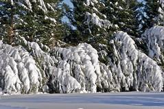 Feb 7, 2010 (-Jeffrey-) Tags: city winter usa snow cold weather del delaware february feb blizzard eastcoast delmarva doverdelaware stateofdelaware delawarecapital