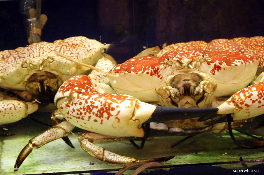 Pantai Seafood Restaurant - Aust King Crab