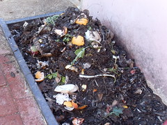 My Compost Heap