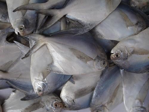 fishmarket 003