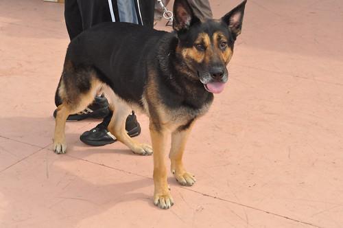 Doglympics 2010