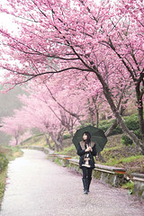 (nodie26) Tags: life portrait people flower girl tour feel taiwan sakura                            aplusphoto
