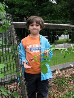 Charlie in the Garden