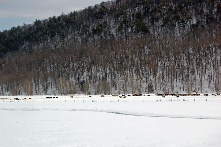 2010_02_21 c