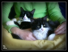 Mushu y Lolita (aunqtunolosepas) Tags: pet cats pets cute animals cat lola adorable kitty kittens gatos lolita tuxedo gato kitties gata felinos felines cuteness cuties mushu gatas gatitas kissablekat aunqtunolosepas
