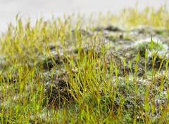Mosscape